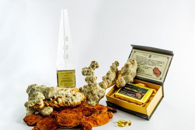 牛樟芝子實體黃金膠囊 4